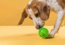 Pets na quarentena: saiba como mantê-los ativos e saudáveis sem descumprir as regras