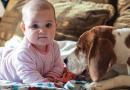 Trouxemos aqui para você: Três raças caninas ideais para crianças
