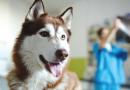 7 respostas às principais dúvidas sobre castração de cães