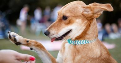 Quais são as vantagens de adestrar um cão?