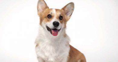 Projeto de lei prevê novas diretrizes para a criação de pets