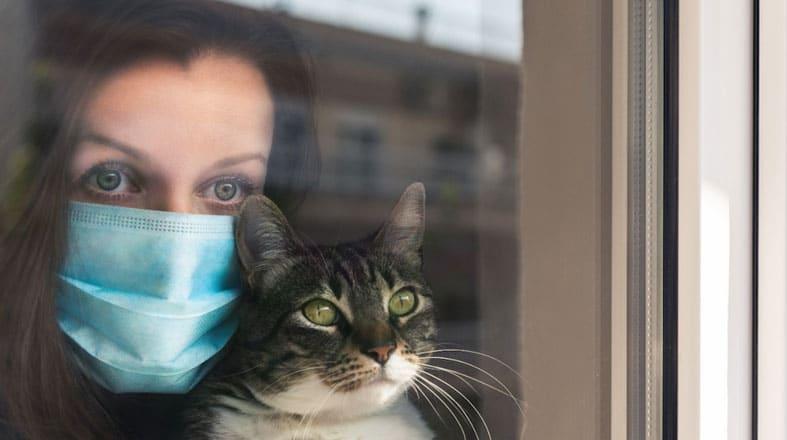 Pets e a Covid-19: como protegê-los?