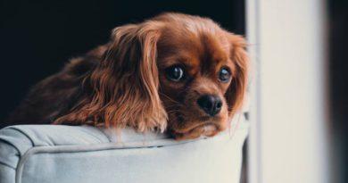 Consultório: Cão sozinho em apartamento.
