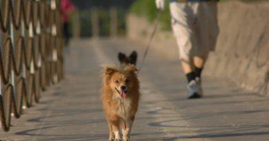 Como passear sem estresse com o cão