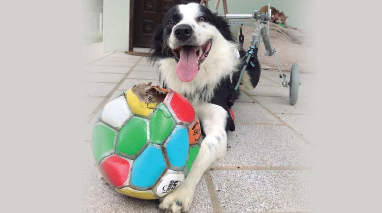 Pets deficientes: como dar qualidade de vida a esses animais