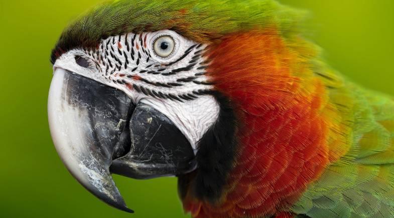 doenças nas aves