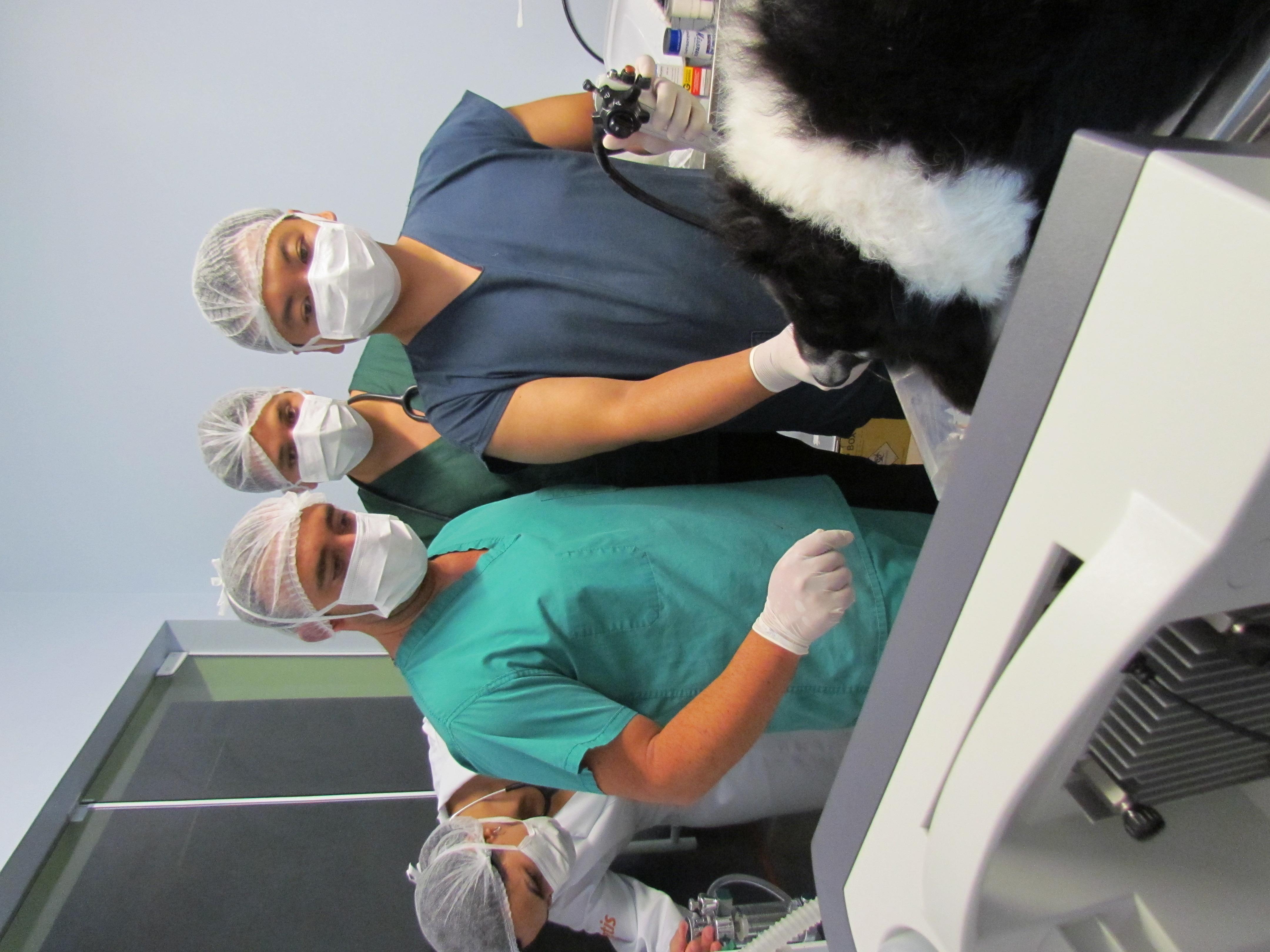 Os benefícios da endoscopia veterinária