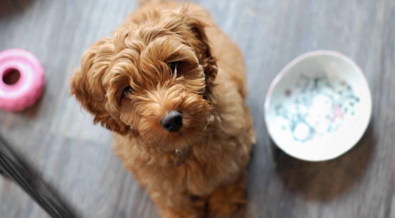 Novas opções de refeição à venda em pets shop